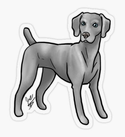 Weimaraner Transparent Sticker