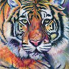 Colorful Tiger by chromaddict