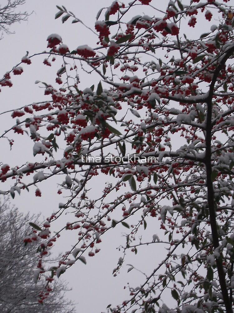 snow berrys by tina stockham