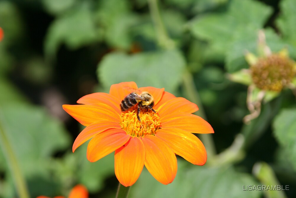 BUSY BEE  by LISAGRAMBLE