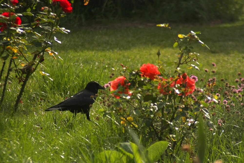 Crow and Roses by agnessa38