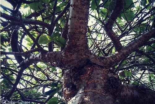 Tree2014 by Luke-Green