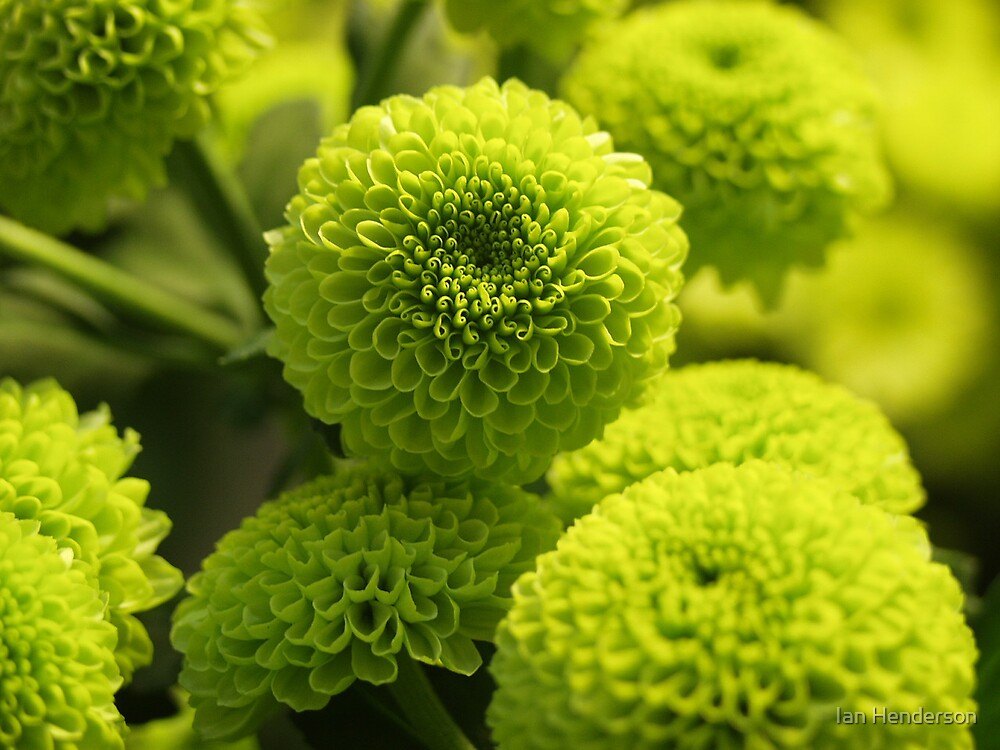 macro green flowers by Ian Henderson