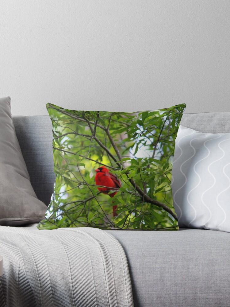 Perched Cardinal by Cynthia48