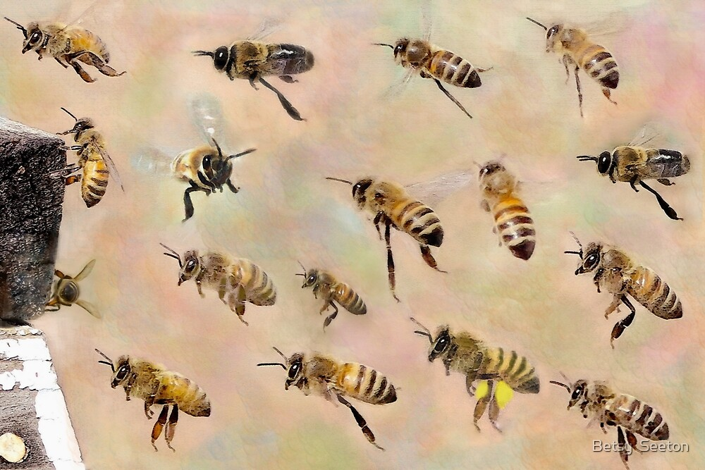 My Sweet Bees 2017 by Betsy  Seeton