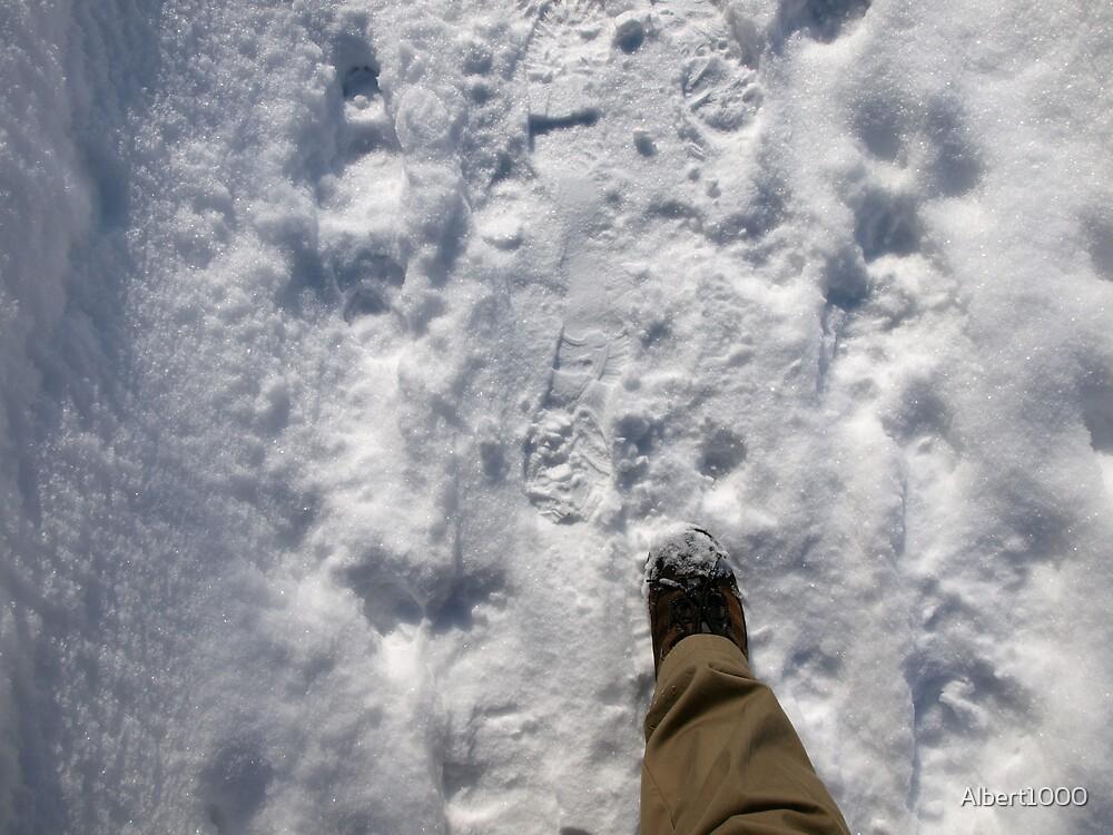 Going for a winter walk by Albert1000