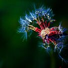 Things are just dandy by Lisa Brower