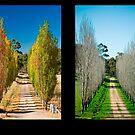 Four Seasons by Simon Hodgson