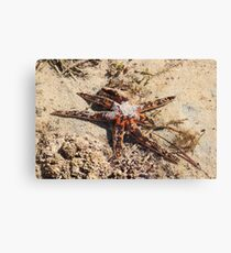Water Creeper Canvas Print