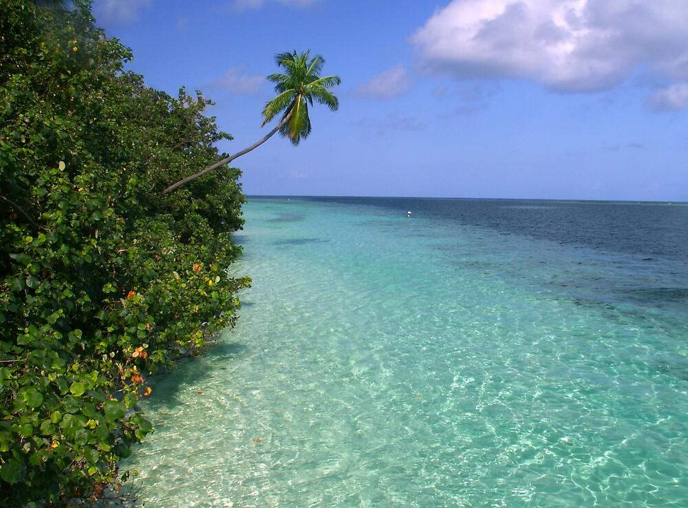 Paradise by TrueBavarian