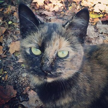 Tortoiseshell cat with green eyes by Hickoryhill