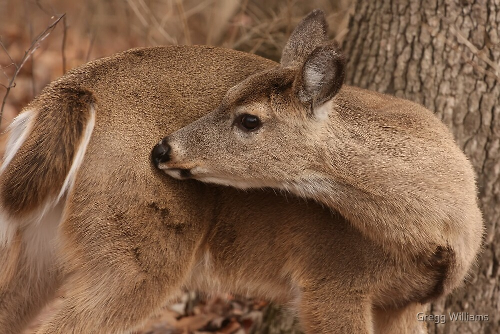 Deer in the woods by Gregg Williams
