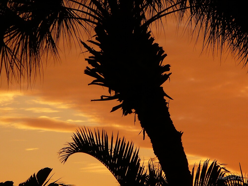 sunset behind palms by marclar71