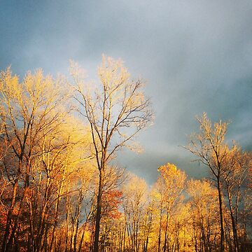 Autumn light on treetops by Hickoryhill