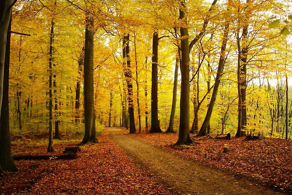 Autumn strikes by TrueBavarian