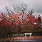 Autumn scene in Amish Country by Hickoryhill