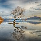 Wanaka Tree by Linda Cutche