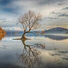 Wanaka Tree by Linda Cutche
