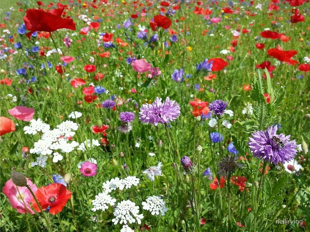 Wild Flowers by neilirving