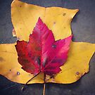 Autumn leaf composition by Hickoryhill