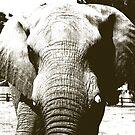 Elephead by William Hallatt