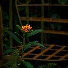 The forgotten corner by Celeste Mookherjee