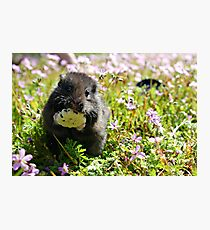 Cute Hamster 2 Photographic Print