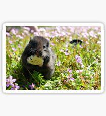 Cute Hamster 2 Sticker