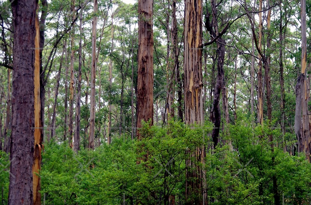 Trees from the Southern Forest by rom01