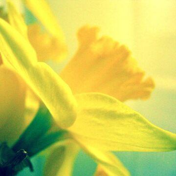 Daffodil by apricotcoffee