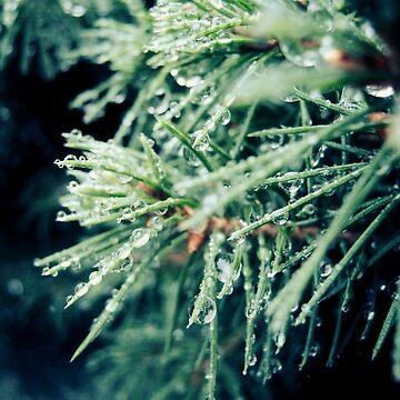 Pine needles in rain by apricotcoffee
