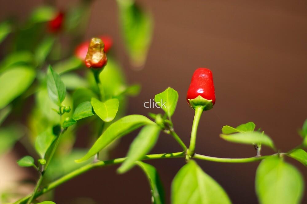 Chilli by click