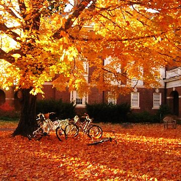College campus in autumn by apricotcoffee