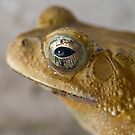Toad by palmerphoto