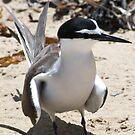 Cheeky Bird by palmerphoto