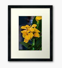 Orchid Vanda Yellow Framed Print