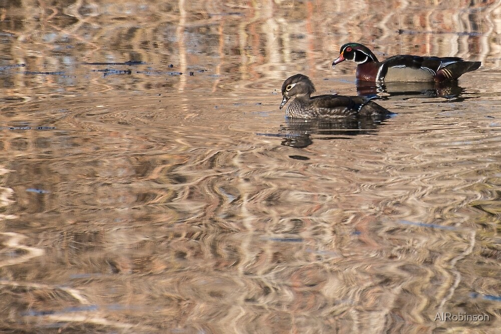 wood duck pair by AlRobinson