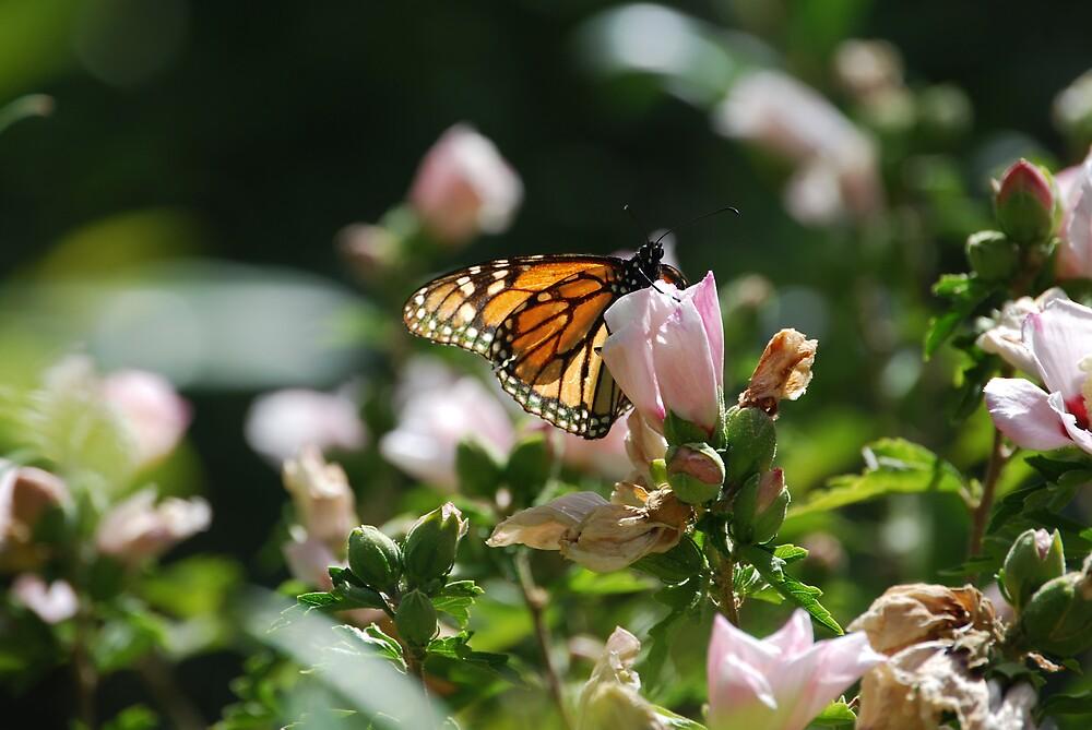 Beautiful Butterfly by Princessbren2006