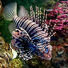 15 - BLACKPOOL AQUARIUM - 2006 by BLYTHPHOTO