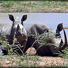 Rhino Mother with Calf by Chris Coetzee