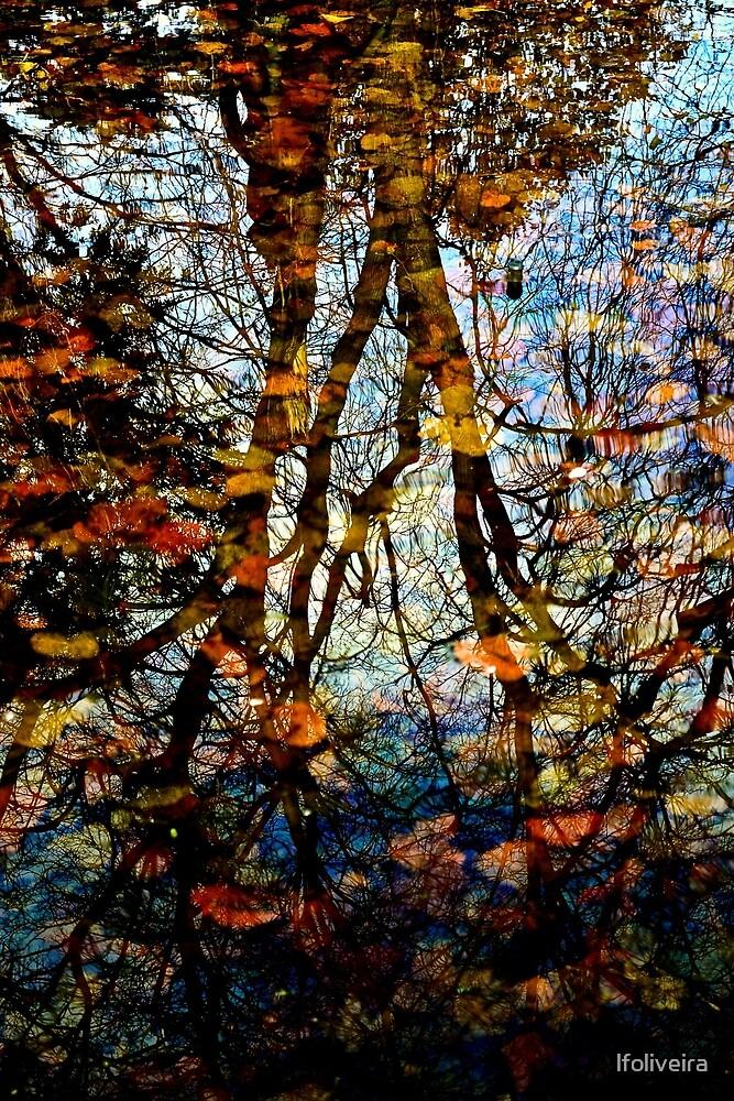 tree reflection by lfoliveira
