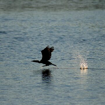 Duck Runway by Jonicool