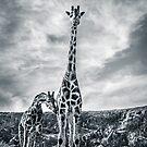Giraffe - Head In The Clouds by George Wheelhouse