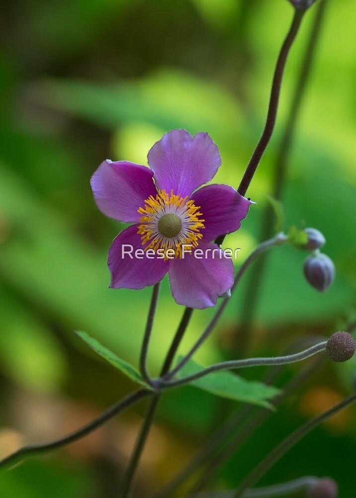 Purple Flower by Reese Ferrier