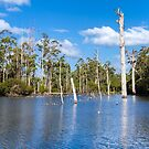 The Lake at Silkwood Winery, Pemberton, Western Australia by Elaine Teague
