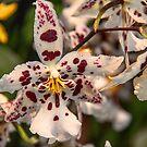 USA. Pennsylvania. Philadelphia Flower Show 2017. Polka Dot Orchids. by vadim19