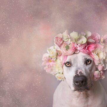 Flower Power, Jessica by SophieGamand