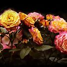 Candlelight Roses by Jessica Jenney