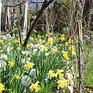 A Touch of Spring in Our Garden by Dennis Melling