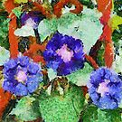 Morning Glory on our Garden Gate in Romania by Dennis Melling